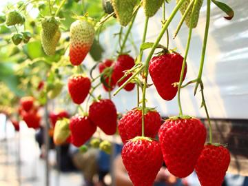 有機農作物に使用可能な農薬に追加